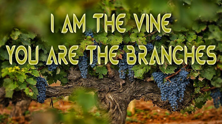 i_am_the_vine_pic04.jpeg