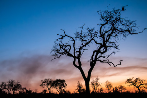 African silhouettes