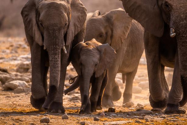Walk of the elephants...and a bird!