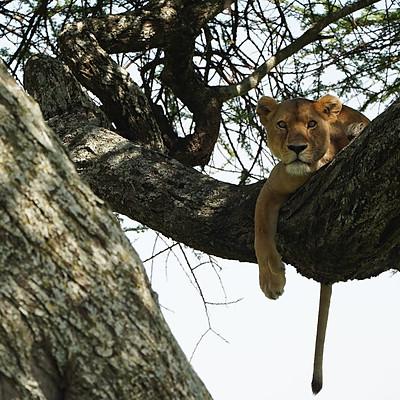 Pure Wildlife