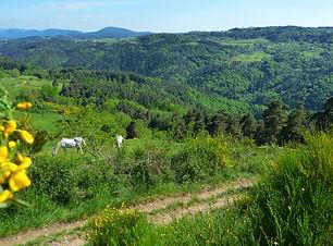 valle-de-lance-photo-j-cp-cl.jpg.800x800