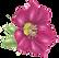 Helleborus-OneFlowerB.png