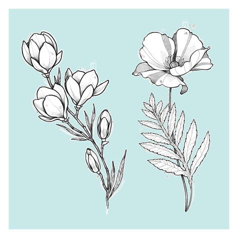 Magnolia y Amapola Kmín Tattoo