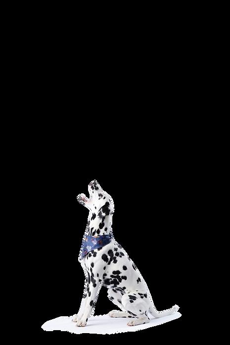 hungrydog.png