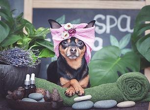 Best-Dog-Grooming-in-Los-Angeles.jpg