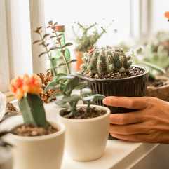 Plant Rental and Care Service
