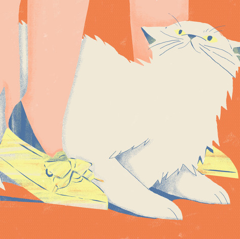 shose and cat