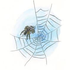 巣作りをあきらめたクモ