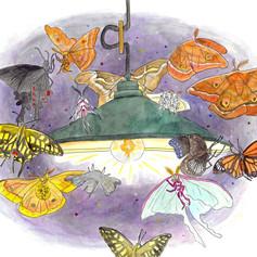 「虫たちの日記」_本文