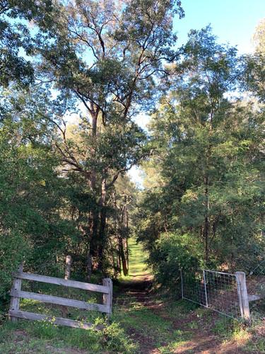 Another bushwalk gateway on Wollombi Farm
