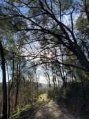 Beautiful early morning walks on Wollombi Farm