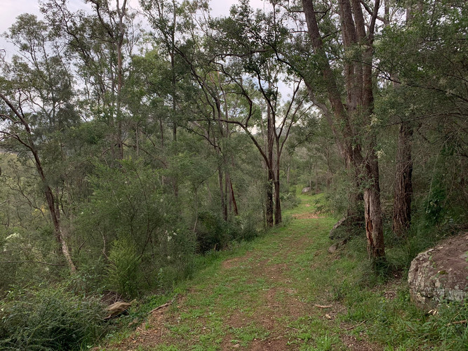 Beautiful bush trails on Wollombi Farm