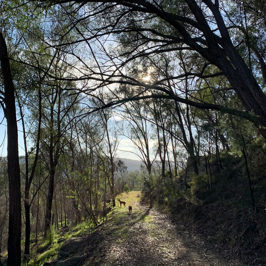 We are pet friendly!  Bushwalks with your besty