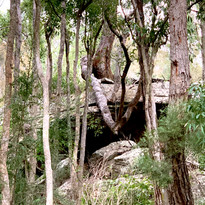 Aussie bush at its best