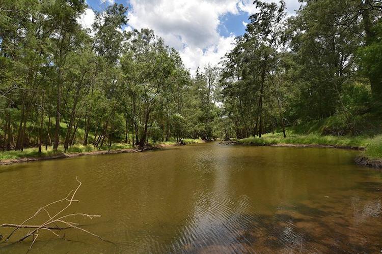 Go fishing in Wollombi Brook