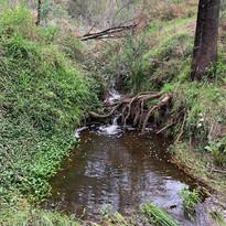 Wollombi Brook meanders around the farm