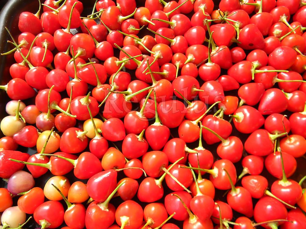 Capsicum Baccatum cv.Pimenta Barro Do Ribeiro