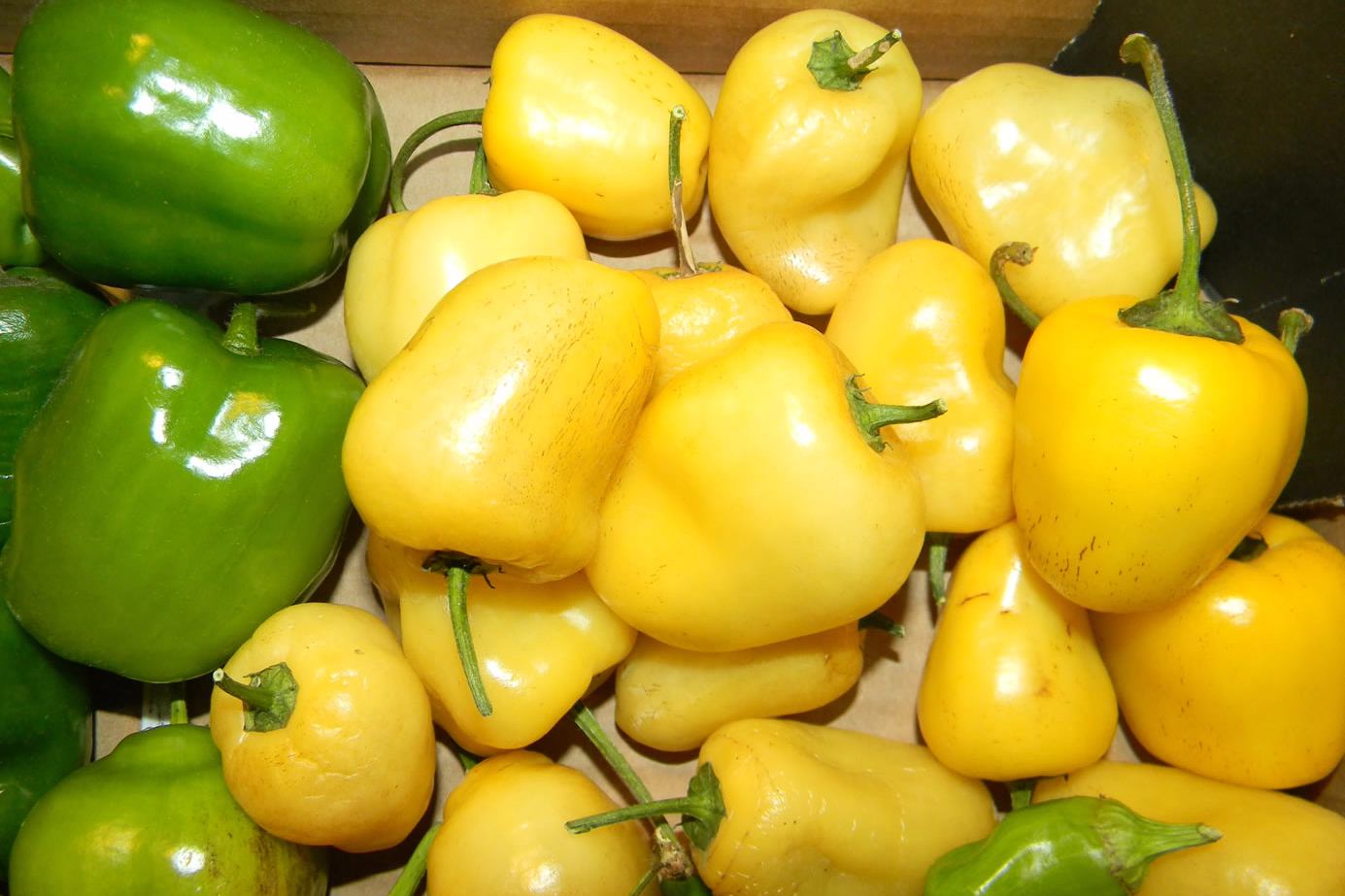Rocoto Yellow