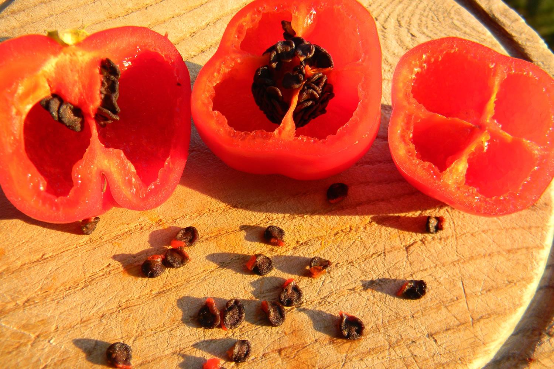 Rocoto CAP 867 Red