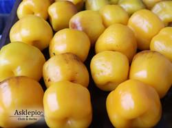 Rocoto Gelbe Riesen