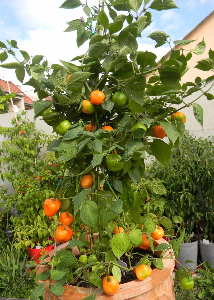 CAP 867 Orange