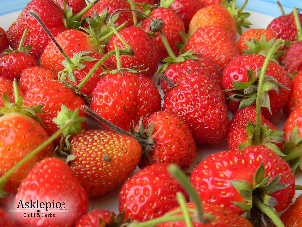 Strawberries ( Fragaria vesca)