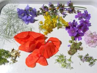 Jedlé květy a rostliny
