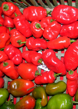 Rocoto Large Red