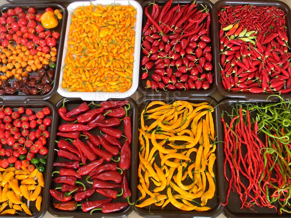 sklizeň chilli papriček