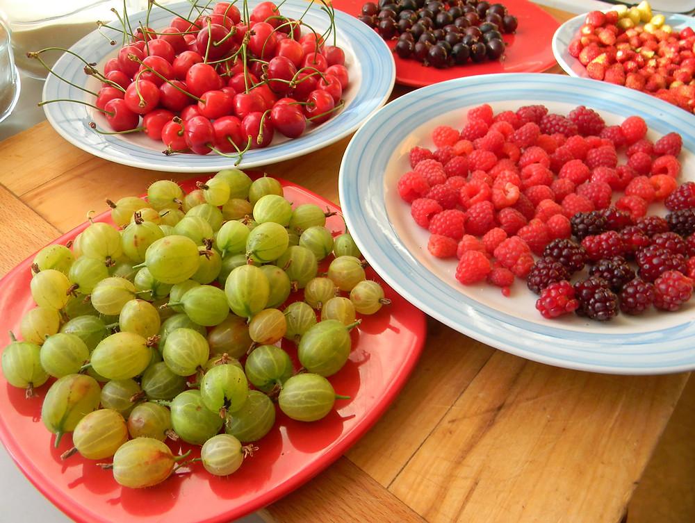 raspberries, wild strawberries, cherries, gooseberries and josty