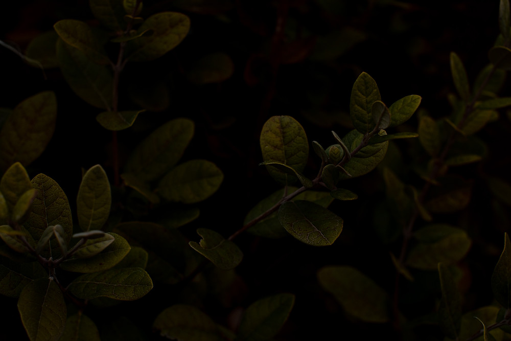 Image of a bush captured at f/5.6 - underexposed