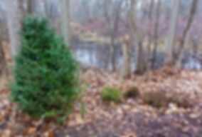 Recycle your Christmas Tree by shielding