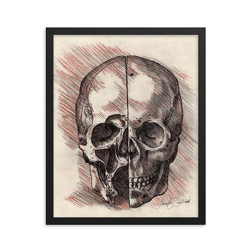 Framed Da Vinci Skull Study Print