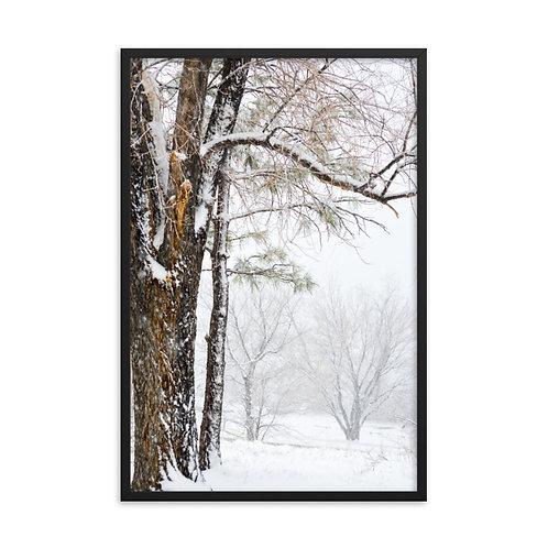 Framed Winter Trees Print
