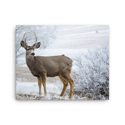 Buck Two Print on Canvas