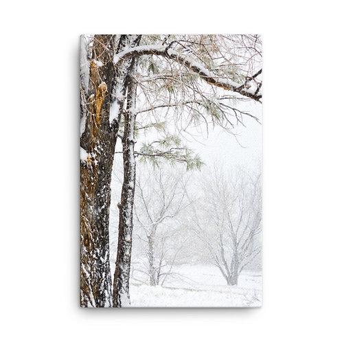 Winter Trees Print on Canvas