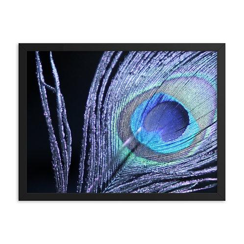 Framed Peacock Print