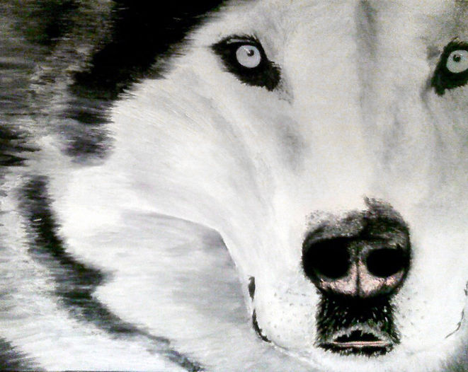 husky.jpg
