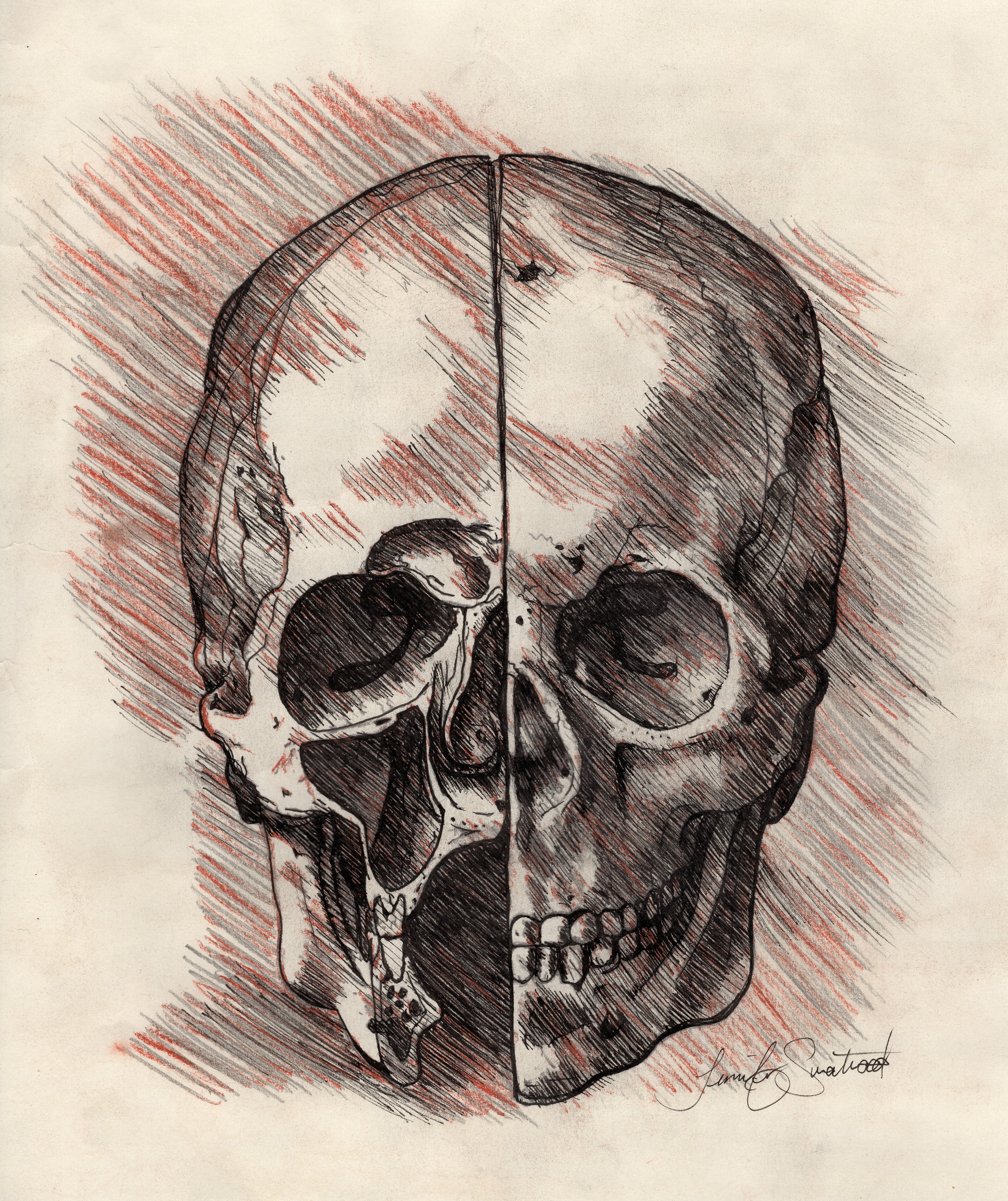 Da Vinci Skull Study