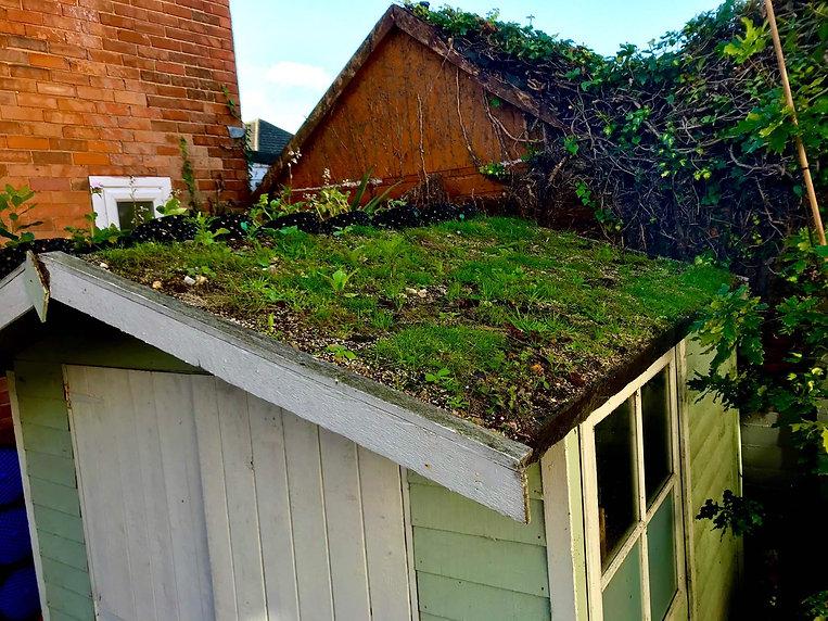 green roof G.jpg
