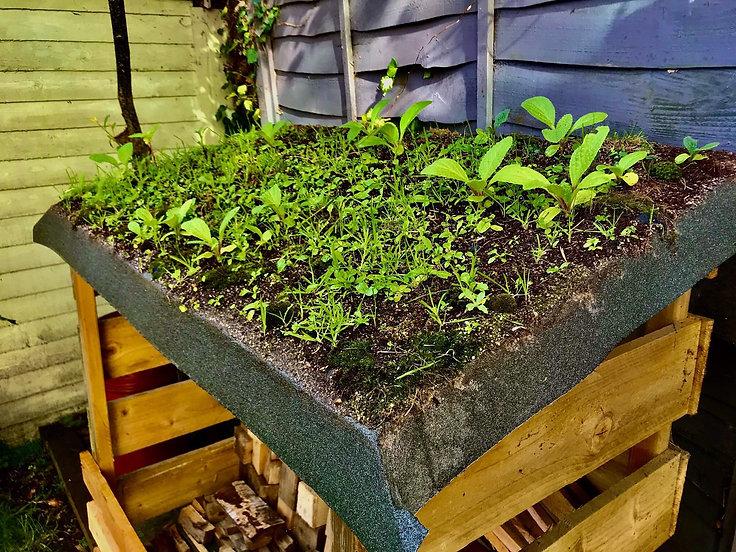 green roof D.jpg