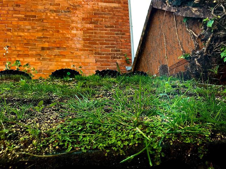 green roof F.jpg