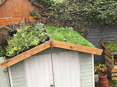 green shed roof.jpg