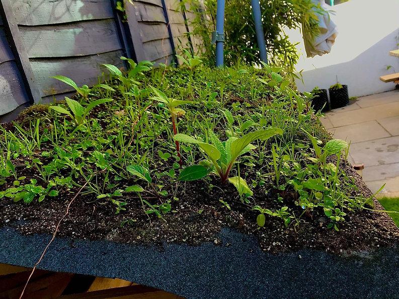 green roof E.jpg