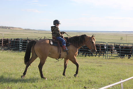 Grazing Bit Performance Horses Barrel Horses For Sale in Wyoming