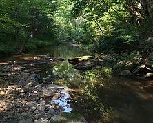 paulding forest wildlife management area