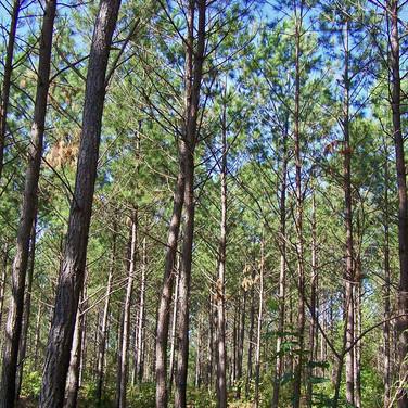 Georgia Alabama timber harvesters clear cut or select harvesting