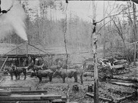 Coleman Sawmill preparing timbers for the first railroad through Paulding County about 188