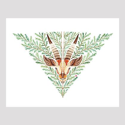 Gazelle 11x14 Print