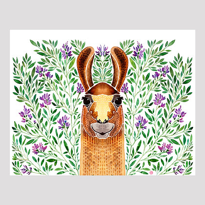 Llama Watercolor 11x14 Print